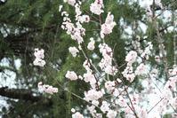 3月の花 - 出不精日記