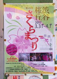 桜丘さくら祭 - でじたる渋谷NEWS