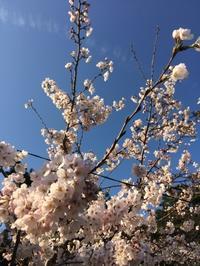 4月のお休み♪ - 観音寺市 美容室 accha