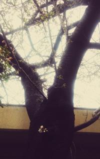 桜咲く - 紙鳶流 おなか想いのたいたいレシピ