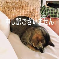 にゃんこ劇場「ニャンコ的お詫びの仕方」 - ゆきなそう  猫とガーデニングの日記