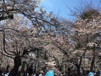 大宮公園でお花見 - 埼玉でのんびり暮らす