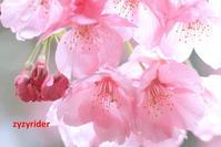 ようやく春がきた - ジージーライダーの自然彩彩