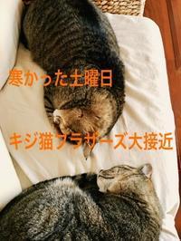 にゃんこ劇場「キジ猫ブラザーズ」 - ゆきなそう  猫とガーデニングの日記