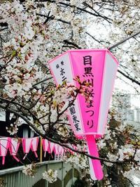 朝のお散歩*目黒川の桜 - E*N*JOY