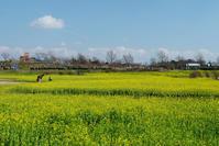黄色の季節 - デジタルで見ていた風景