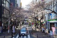桜丘のさくら - でじたる渋谷NEWS