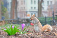 春のピクニック - Triangle NY