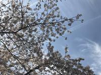 谷中〜ぶらり散歩 - sakurairo