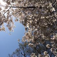 花衣  追悼 - 一会 ウエディングの花