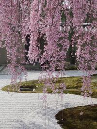 ぶらり京都-132 [高台寺の寧々] - 花の面影 - - 続・感性の時代屋