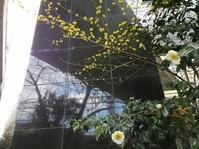 山茱萸の花 - memory
