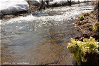春の小川歌詞の変遷 - 北海道photo一撮り旅