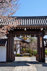 京を歩く~桜色の京都「本満寺のしだれ桜」 - Tomの一人旅~気のむくまま、足のむくまま~