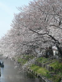 川越散歩4月5日おいでになるなら、ぜひ明日っ!! - 川越散歩