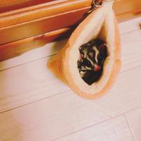 今日から5連休いただきます - 神戸市垂水区 Petit Lapin~プチ・ラパン~