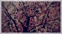 春の衣替え - 世話要らずの庭