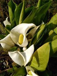いっきに春が、来ました。 - BluemounCoffee わたし日記