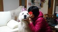 響11歳~♪ママOO歳~♪&デカワン錦帯橋お花見(^^♪ - グレートピレニーズ的生活!!!