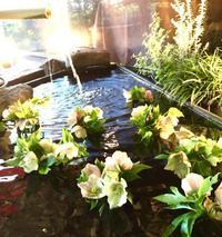 催花雨 - 赤煉瓦洋館の雅茶子