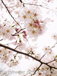 桜の春 - serendipity blog