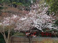和歌山市の寺と神社を訪ねて花見をかねて下見ウオークー1 - 東 道のきのくに花街道