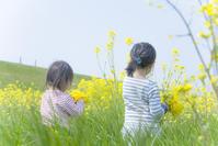 ミツバチの羽音轟く菜の花畑 - カメラガール