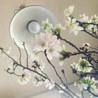 桜咲く。 - PAN  LADRoN  ~あなたのパンのあるところ~
