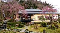 中庭の桜がお花を咲かせました - 金沢犀川温泉 川端の湯宿「滝亭」BLOG