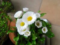 開花は買いか - 役に立ちそうでなかなか役に立たないような気がするブログ