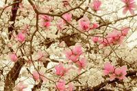 *花の命* - 心写心癒  ~心の鏡~
