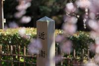 京のさくら2017京都御苑近衛邸跡の糸桜 - ぴんぼけふぉとぶろぐ2