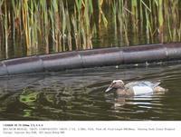谷津干潟公園・淡水池 2017.4.8(1) - 鳥撮り遊び