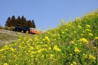 菜の花築堤をゆく、里山トロッコ列車 小湊鐵道 - My B Side Life season2