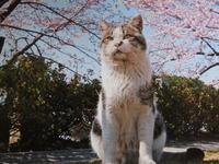 猫カレンダー - 日々つれづれ