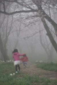 ★霧中の桜道 - 一写入魂