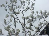 リノベの現場「5年計画・8年計画、お庭の花木は長い目で育てましょう!」編 - 納屋Cafe 岡山