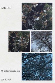 桜🌸が咲かない - 妄想旅