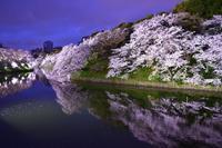 今年の桜はこれだけ! - Works in the Shell annex @ まったり