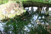 池の川水源。 - 青い海と空を追いかけて。