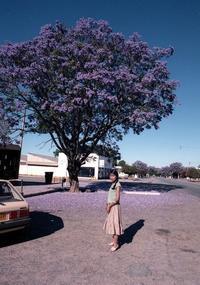 1985年のジンバブエ、真紫のジャカランダ、 Zimbabwe - nshima.blog