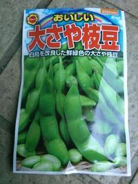 枝豆の種まき - うちの庭の備忘録 green's garden