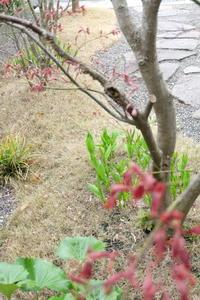 久しぶりに登場...我が家の庭。春ですねぇ~ヾ(o´∀`o)ノ - WITH LATTICE