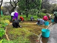 2017年4月例会〜雨の中で「芽かき」草花の植え付け、清掃など - 駒 場 バ ラ 会 咲く 咲く 日 誌