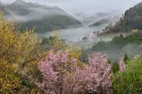 雨の日の西吉野 - 峰さんの山あるき