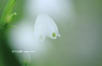 切ない日 - 花々の記憶  happy momo