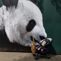 上野動物園 - the way it goes ~to a fulfilling life~