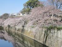 ♪2017★桜セラピー(目白~池袋) - MY FAVORITE SPACE