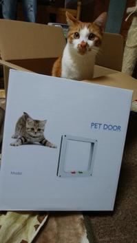 猫扉 - リリィとジローのねこ日記