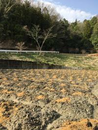 桑 350本 植えたどー💪🏻 - マルベリークラブ中部 <自然の叡智を桑・蚕に学ぼう 環境保全・里山づくり>